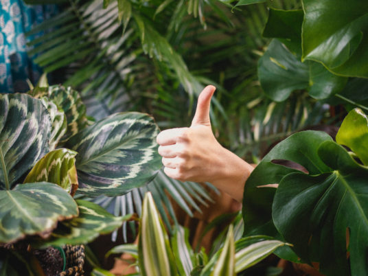 Thumbs up in the midst of thick vegetation